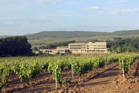 <p>El Instituto de Ciencias de la Vid y del Vino (ICVV) organiza para el próximo jueves, 27 de julio, un taller sobre Gestión de Enfermedades de la Madera y Flavescencia Dorada en La Rioja que está dirigido, especialmente, a viticultores y personal técnico de bodegas.</p>  <p>El taller, que se celebrará en las instalaciones de La Grajera (Logroño), abordará la problemática de ambas patologías desde un punto de vista técnico, centrándose en las prácticas de gestión más comunes o innovadoras identificadas en