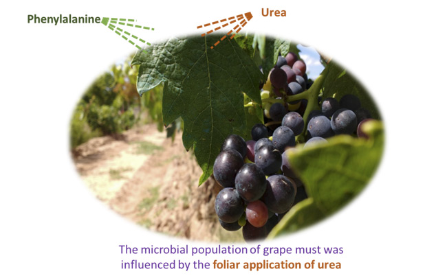 Phenylalanine and urea foliar application: effect on grape and must microbiota.