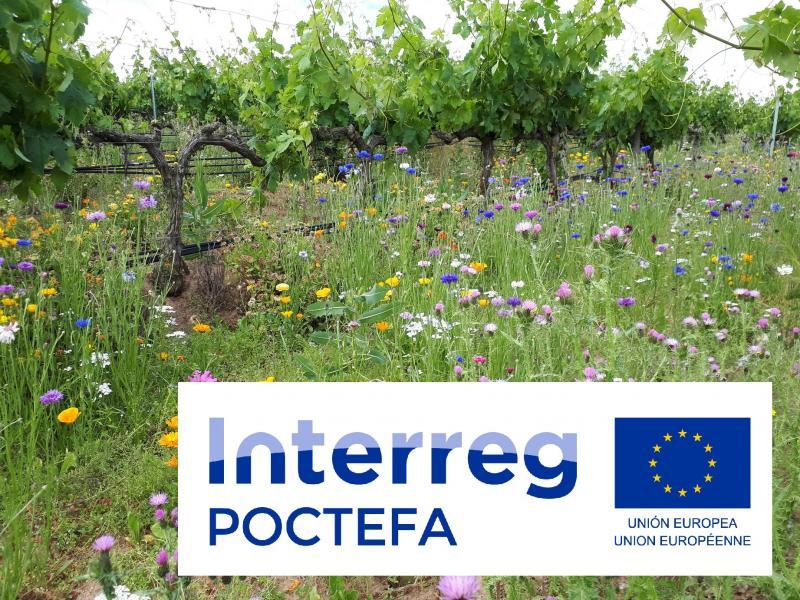 Nuevo proyecto europeo Interreg POCTEFA VITISAD