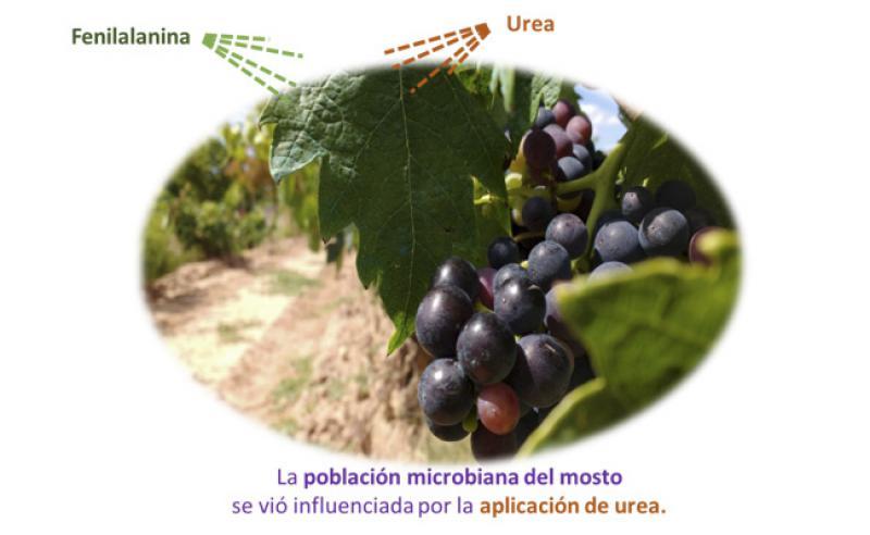 Aplicación foliar de fenilalanina y urea: efecto sobre la microbiota de uva y de mosto